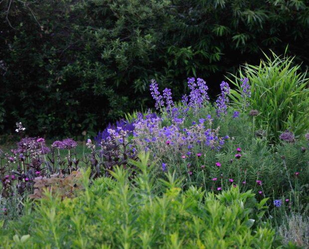 plantwerk - tuin in mei en juni