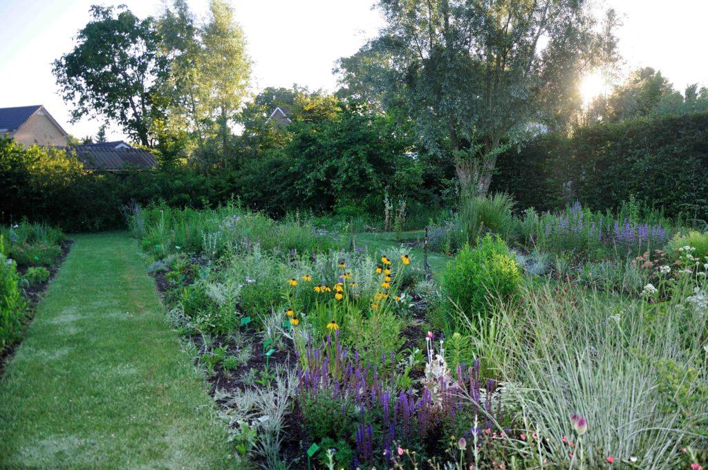Nieuwe border voor een natuurlijke tuin