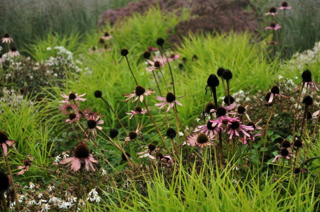 PLANTWERK - planten met karakter