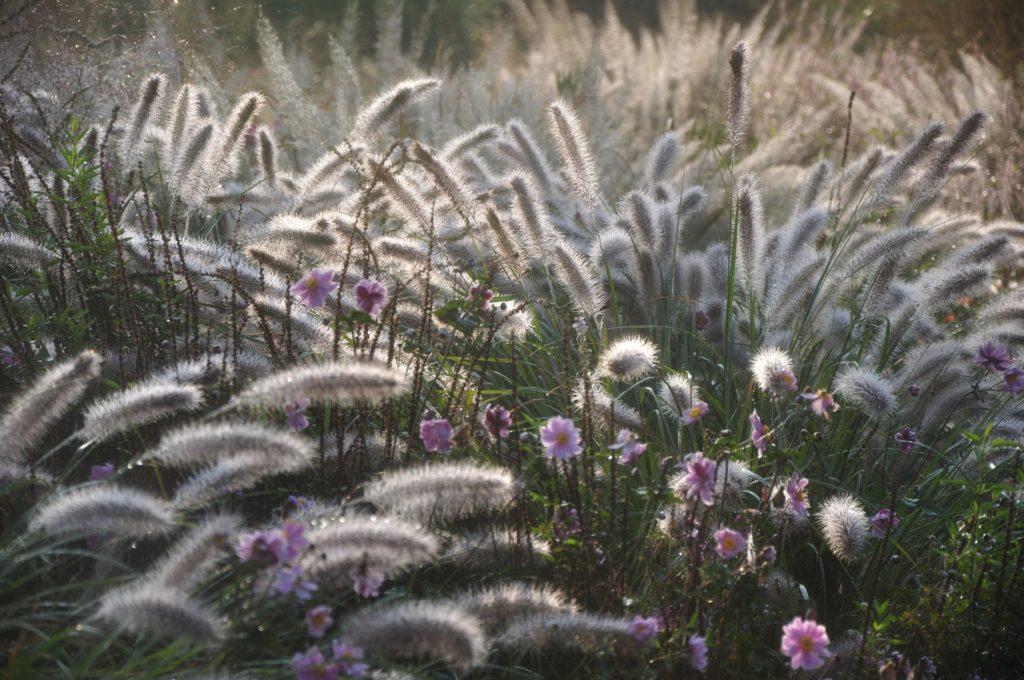 PLANTWERK - tuin 4 seizoenen